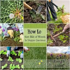 get rid of weeds in vegetable gardens