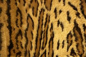 wild animal print wallpaper. Brilliant Print Photo Gallery Of  Wild Animal Print Wallpaper Intended Animalialifeclub