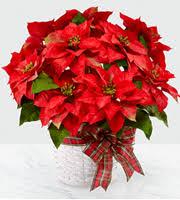 Apple Annie's <b>Garden</b> Gate Floral & Gifts <b>Christmas</b> - 12/25 Ennis ...