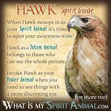What Is A Hawk Light Hawk Symbolism Meaning Spirit Totem Power Animal