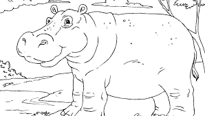 Coloring Pages Printable Animal Colouring Pages Hippopotamus