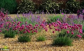 Small Picture Show Some True Grit Daily Mail Online pertaining to Gravel Garden