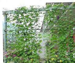 Durable Nylon Trellis Net Netting Plant Support For Climbing Climbing Plant Trellis
