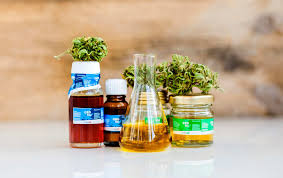 a collection of cbd oil tinctures along with hemp buds and a beaker of cbd oil