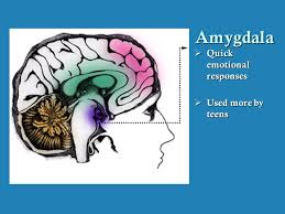 Teens and the amygdala