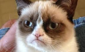 grumpy cat good smile. Interesting Cat Grumpy Cat Owner Awarded Over 700000 In Lawsuit Still Wonu0027t Smile To Good Smile Bangor Daily News