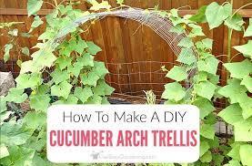 cuber arch trellis