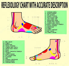 Foot Reflexology Chart Or Acupuncture Stock Vector Ixies