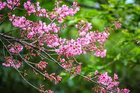 top 10 beautiful indian flowering trees