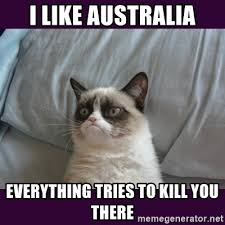 I like australia Everything tries to kill you there - tard the grumpy cat 2  | Meme Generator