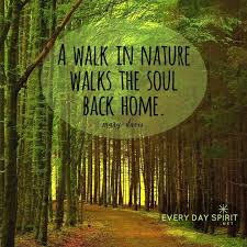 Forest Quotes Unique Image Result For Quotes About Jungle Forest Earth Nature