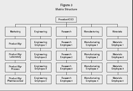 Prototypical Company Organisation Chart Example General