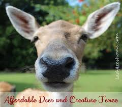 affordable deer fence and creature