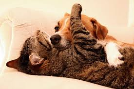 even scent hounds can like cats