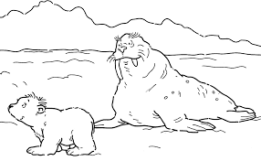 Lars De Kleine Ijsbeer Vind En Print Bliksemsnel Een Kleurplaat