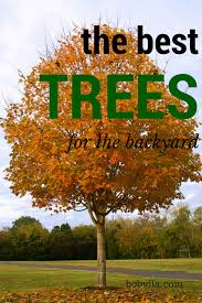 10 Of The Best Trees For Any Backyard  Small Trees Yards And PlantsGood Trees For Backyard