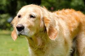 Das a und o für eine erfolgreiche hundeassage ist selbstverständlich ruhe. Alter Hund So Konnen Sie Helfen Die Tierexperten
