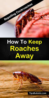tips and tricks on how to keep roaches away and get rid of roaches in your