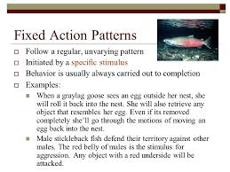 Fixed Action Pattern Example Mesmerizing Animal Behavior AP Biology Ppt Video Online Download