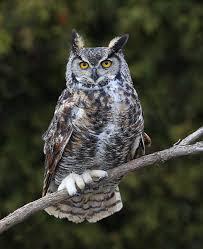 barn owl glenn master gardeners