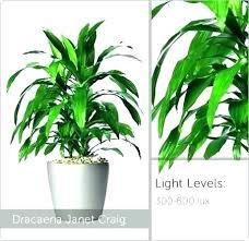 office plants no light. No Light Plants Sunlight Lamp For Office .
