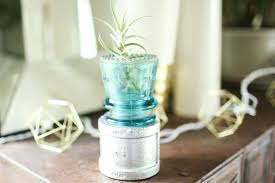 Air Plant Display Diy Air Plants Display Idea Ideas To Reuse Electrical Insulator