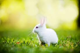 white rabbit wallpaper. Contemporary White 1600x883 Rabbit Wallpapers HD Pictures  One Wallpaper  With White