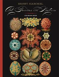 ernst haeckel art forms in nature coloring book nature coloring book