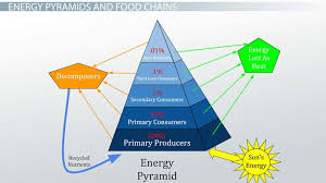 The 10 Energy Rule In A Food Chain