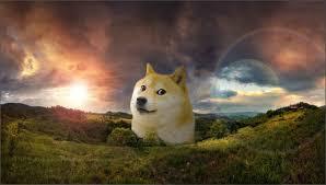 doge wallpaper android. Wonderful Doge Dogewallpaper3jpeg3370x1909 829 KB To Doge Wallpaper Android