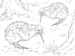 Small Picture New Zealand animals coloring pages Free Printable Pictures