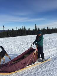 learn about one of alaska s most unique lifestyles and take a ride on snow covered trails on dog sled