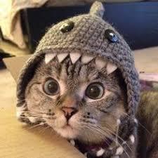 120 Cat Dresses ideas | crazy cats, cat dresses, cats