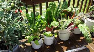 container gardening tomatoes. Interesting Container With Container Gardening Tomatoes