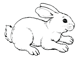 Rabbit To Color Picture Of Bunny To Color Bunny Rabbit Colouring