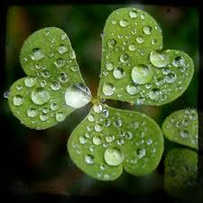 Image result for gentle rain images