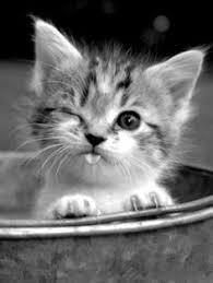 """Résultat de recherche d'images pour """"blinkies gratuits chats trop facile"""""""