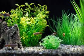 Why Stocking Your Aquarium Evenly with the Right Fish is Important. Freshwater  Fish & Aquariums