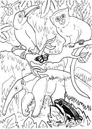 Small Picture Rainforest Coloring Pages Pdf Archives In Rainforest Coloring Page
