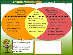 Difference Between Amphibians And Reptiles Venn Diagram Pin By Tania Avellaneda On Homeschool Science Ideas
