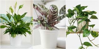best shade loving houseplants
