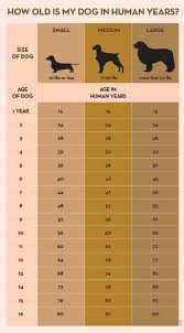 Dog Age Chart By Weight Dog Years Calculator Is It Really Seven To One The Dog