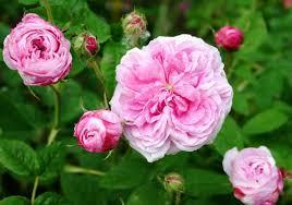 10 lovely cottage garden flower ideas