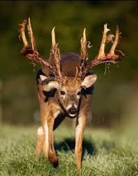 Best Time To Hunt Deer Best Laptop