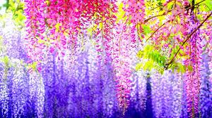 cool flower wallpaper