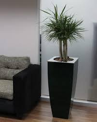 office pot plants. Interior Plant Rental Office Pot Plants O