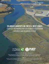 Use Of Eelgrass Beds Zostera Marina By Juvenile Atlantic Cod
