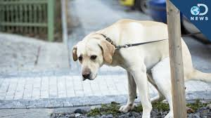 Why Dogs Spin Before They Poop - YouTube