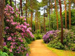 spring nature backgrounds. #99AA44 Color - Floral Summer Path Trees Pink Spring Nature Flowers Flower Beautiful Purple Alley Backgrounds K