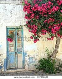 old door and white plastered wall with a tree that gives beautiful red flowers on
